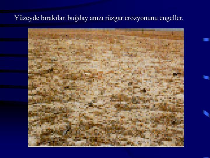 Yüzeyde bırakılan buğday anızı rüzgar erozyonunu engeller.