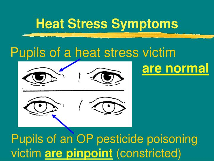 Heat Stress Symptoms