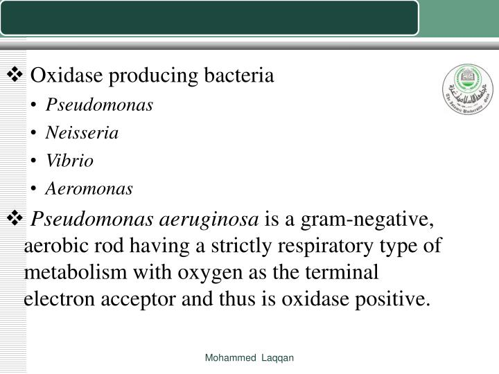 Oxidase producing bacteria