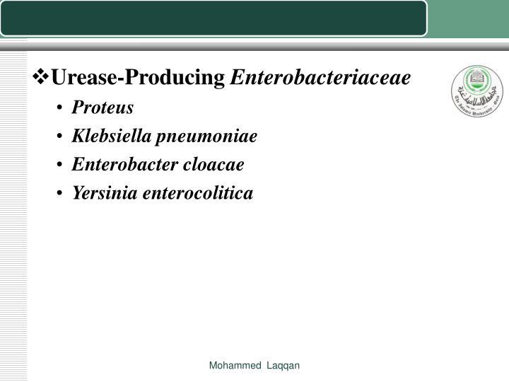 Urease-Producing
