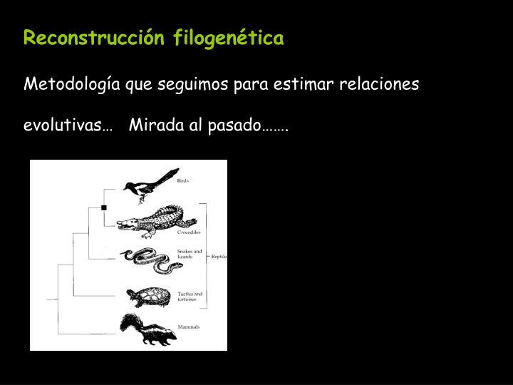 Reconstrucción filogenética