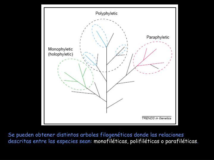 Se pueden obtener distintos arboles filogenéticos donde las relaciones