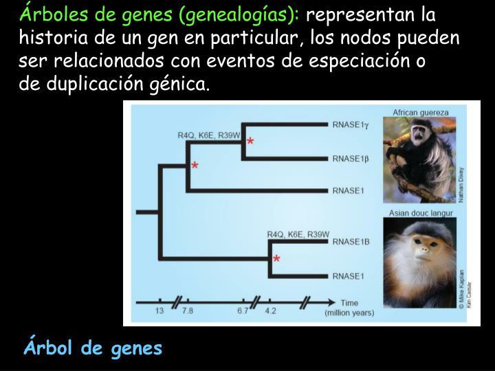 Árboles de genes (genealogías):