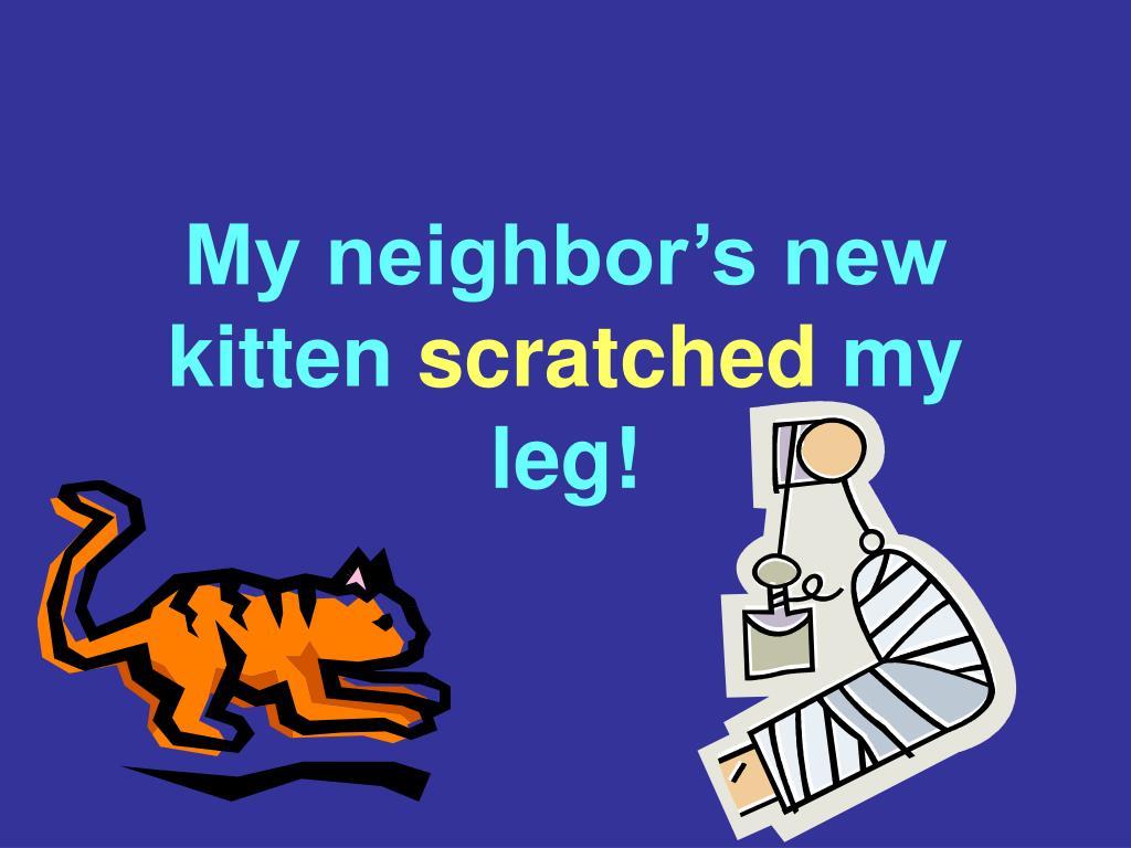 My neighbor's new kitten