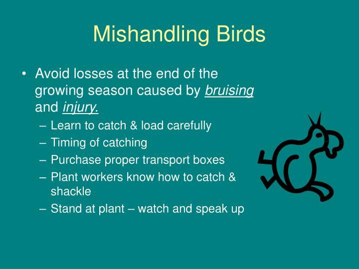 Mishandling Birds