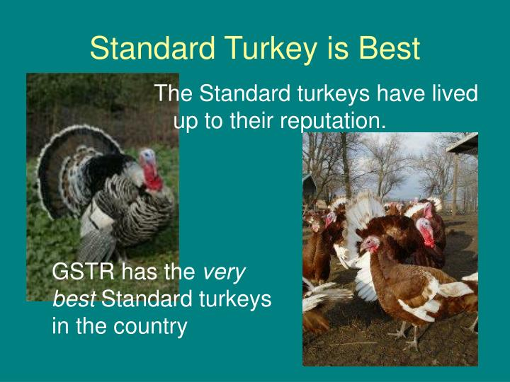 Standard Turkey is Best