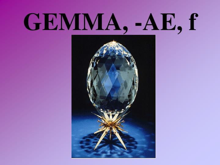 GEMMA, -AE, f
