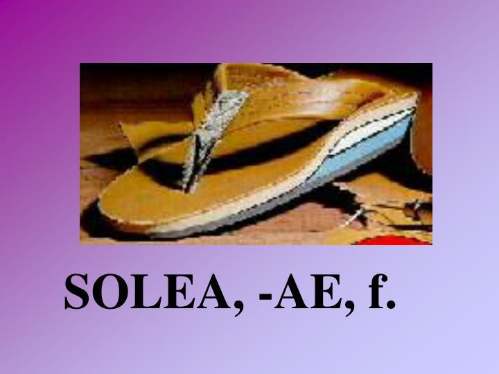 SOLEA, -AE, f.