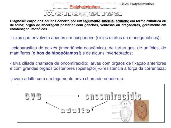 Ciclos: Platyhelminthes