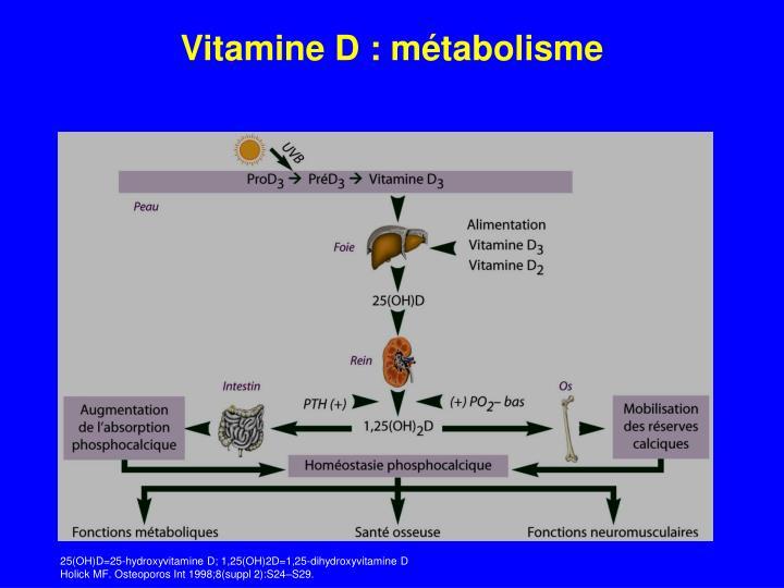 Vitamine D : métabolisme