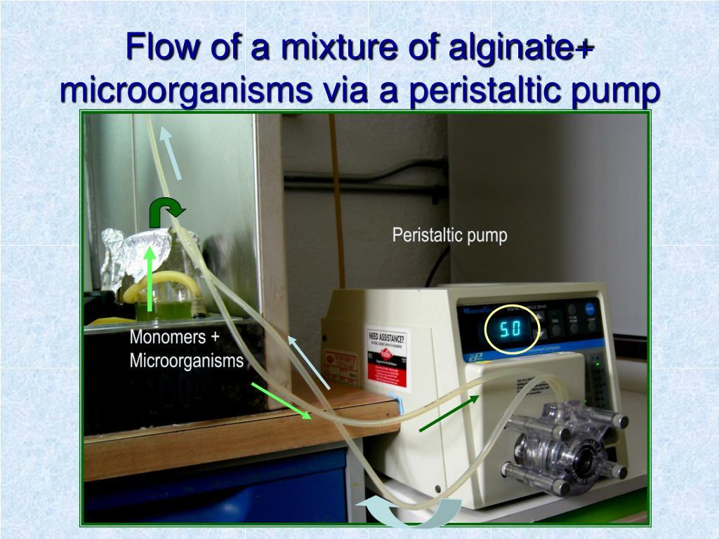 Flow of a mixture of alginate+ microorganisms via a peristaltic pump