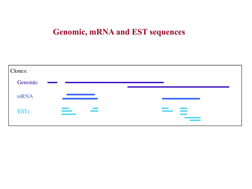 Genomic, mRNA and EST sequences
