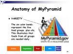 anatomy of mypyramid12