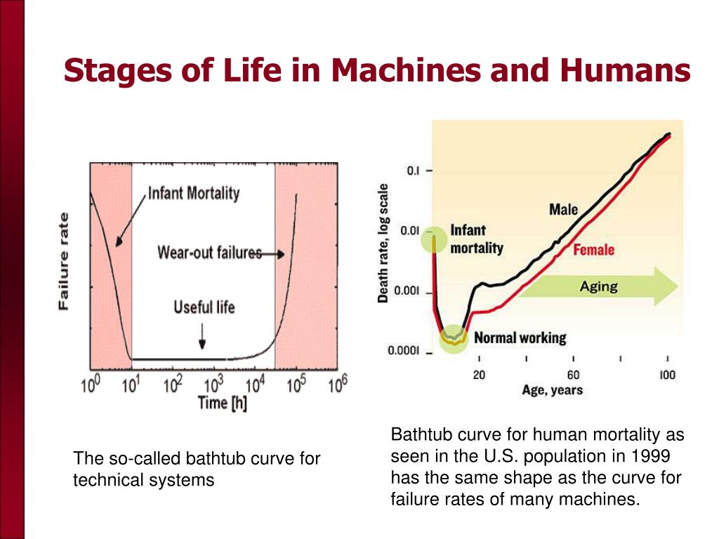 Stages of Life in Machines and Humans