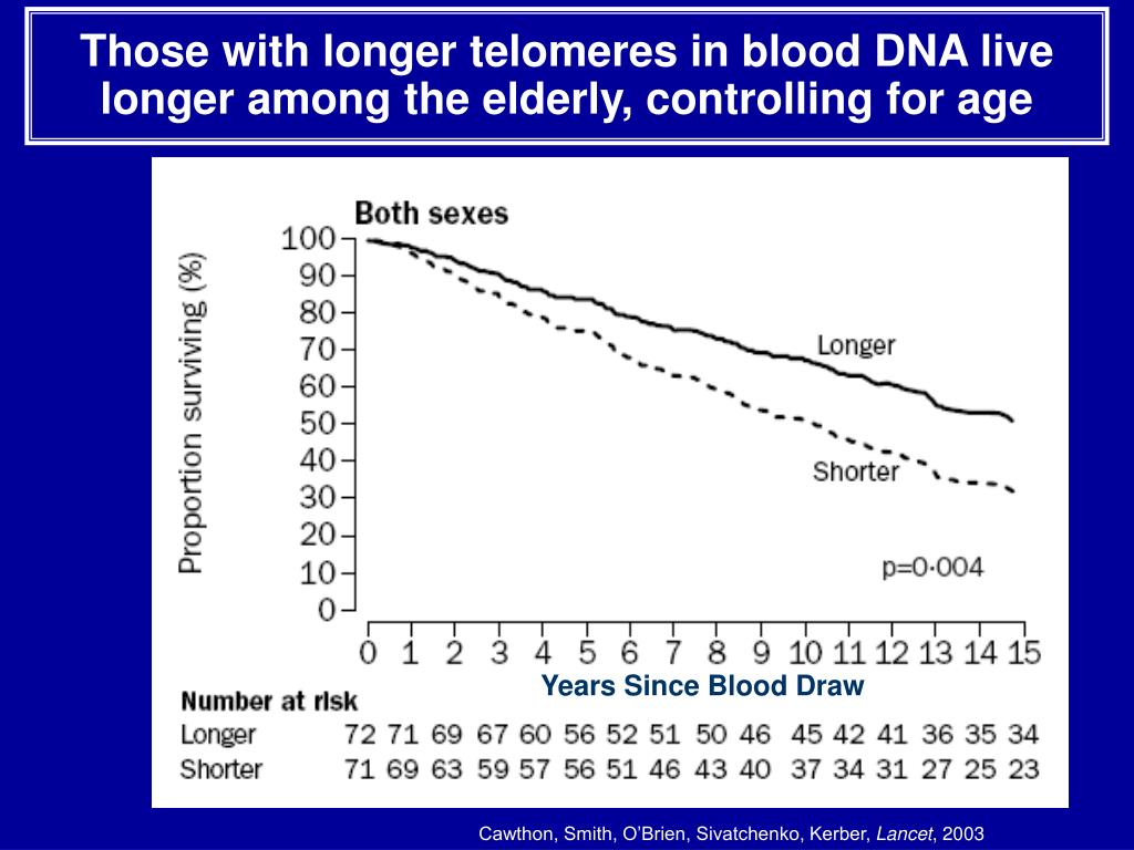 Those with longer telomeres in blood DNA live longer among the elderly, controlling for age