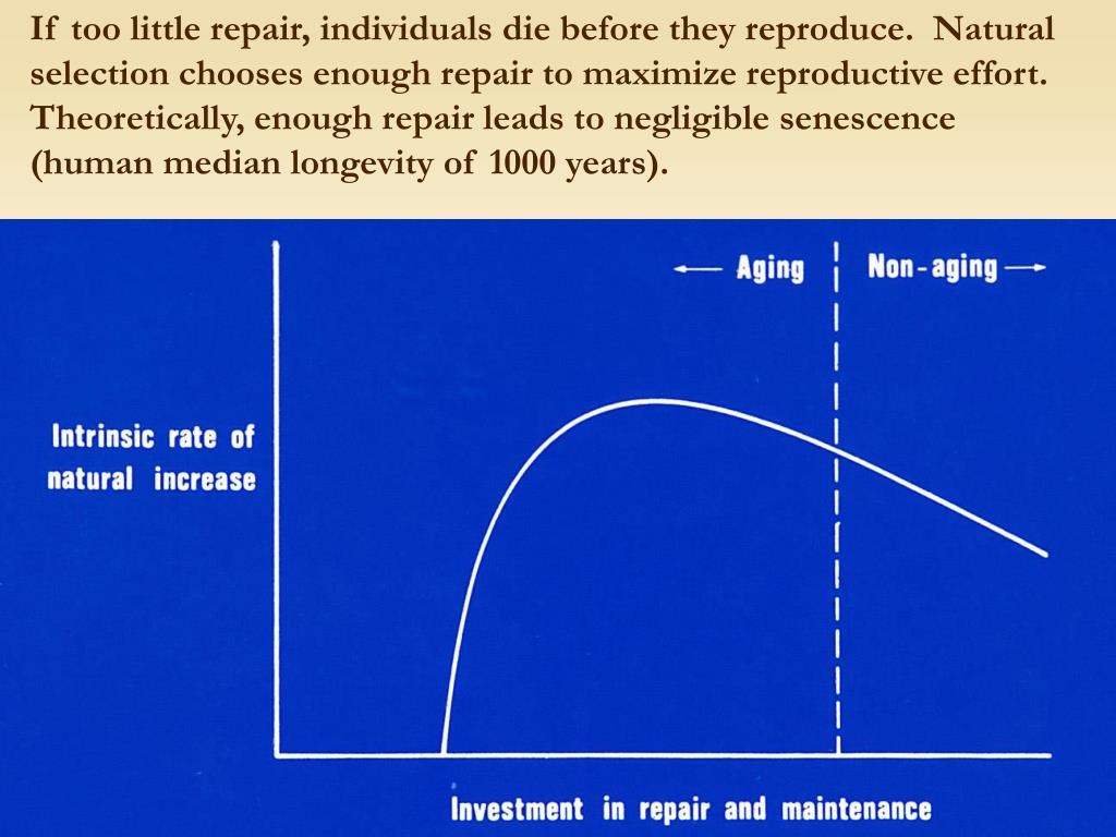 If too little repair, individuals die before they reproduce.  Natural selection chooses enough repair to maximize reproductive effort.  Theoretically, enough repair leads to negligible senescence (human median longevity of 1000 years).
