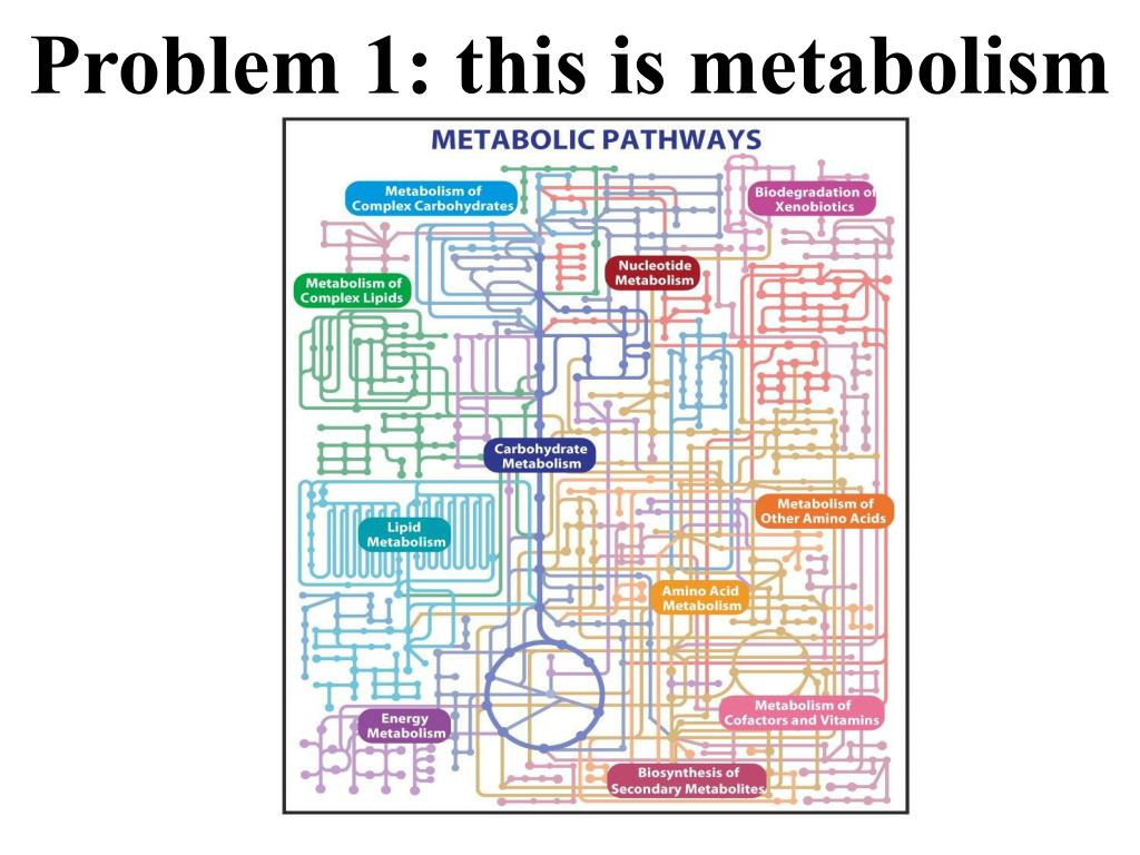 Problem 1: this is metabolism