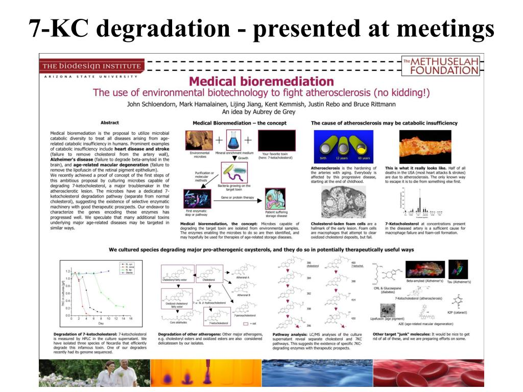 7-KC degradation - presented at meetings