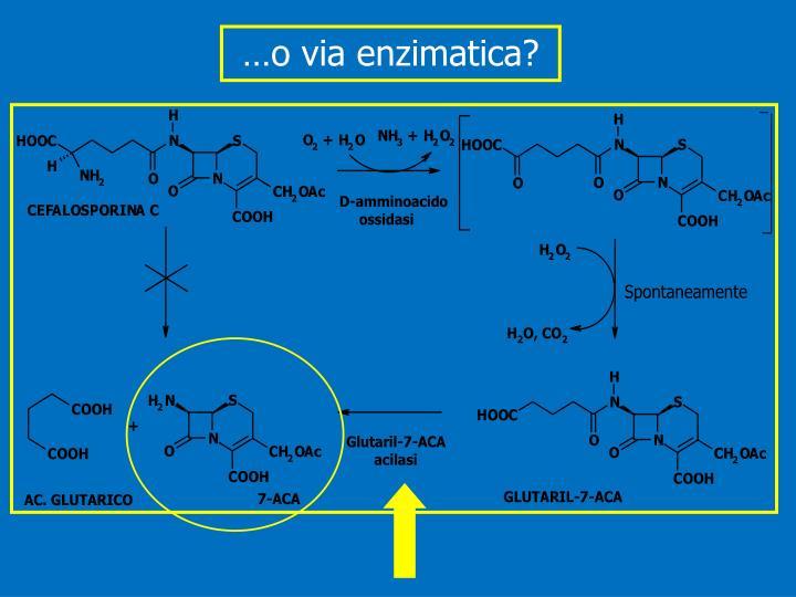 …o via enzimatica?