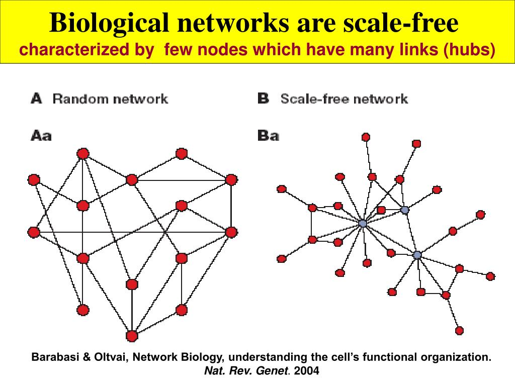 Biological networks are scale-free