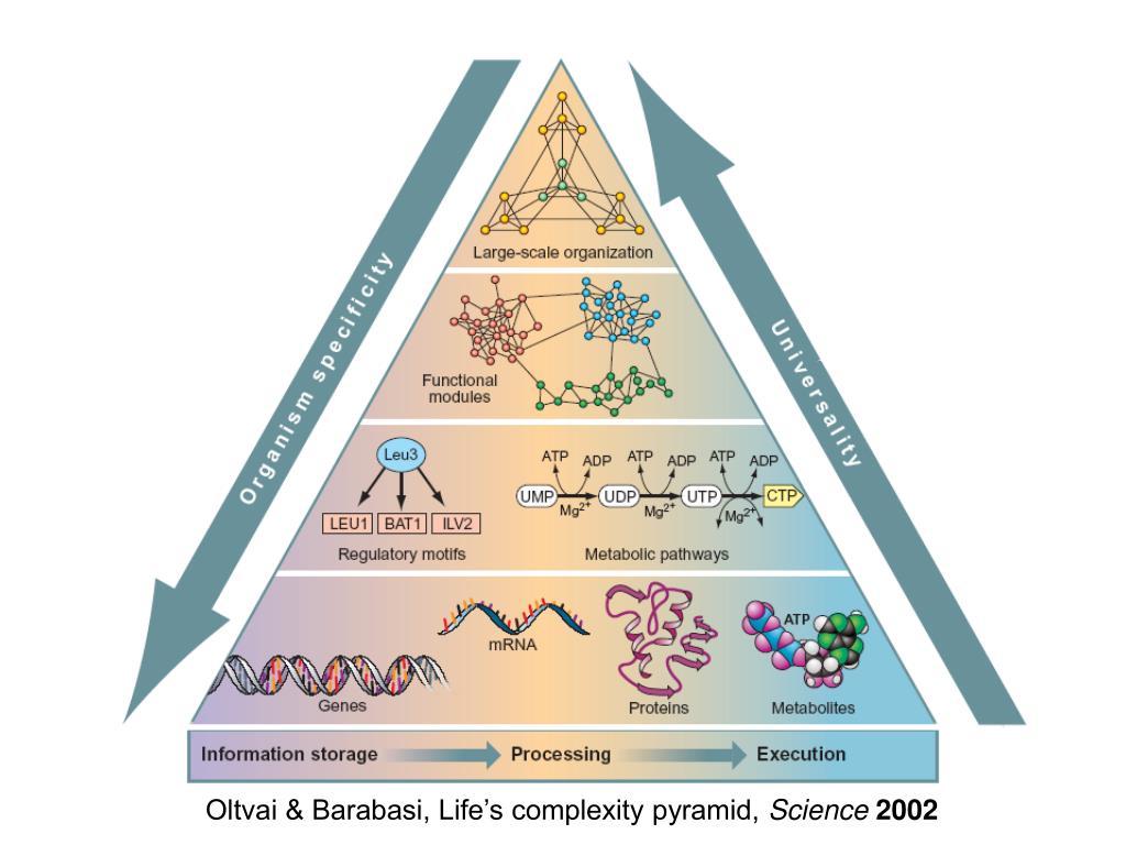 Oltvai & Barabasi, Life's complexity pyramid,