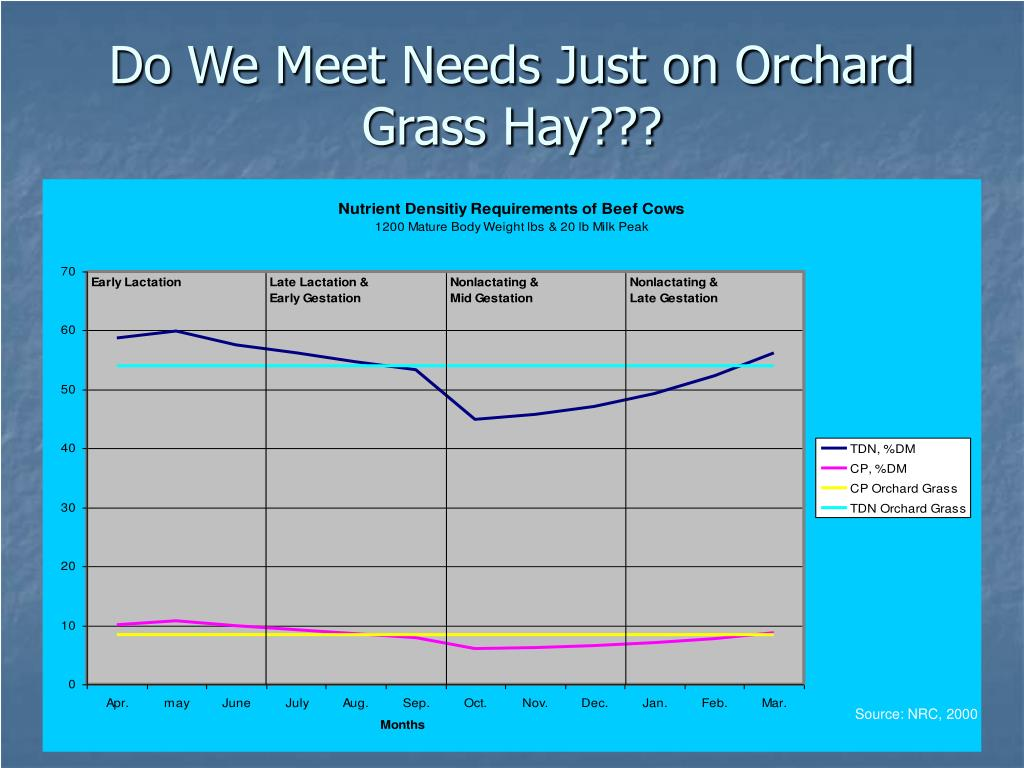 Do We Meet Needs Just on Orchard Grass Hay???