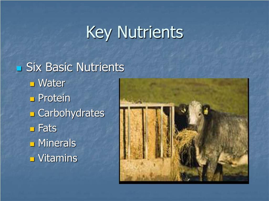 Key Nutrients