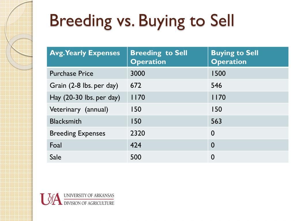 Breeding vs. Buying to Sell