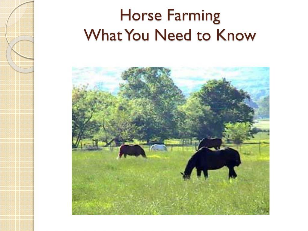 Horse Farming