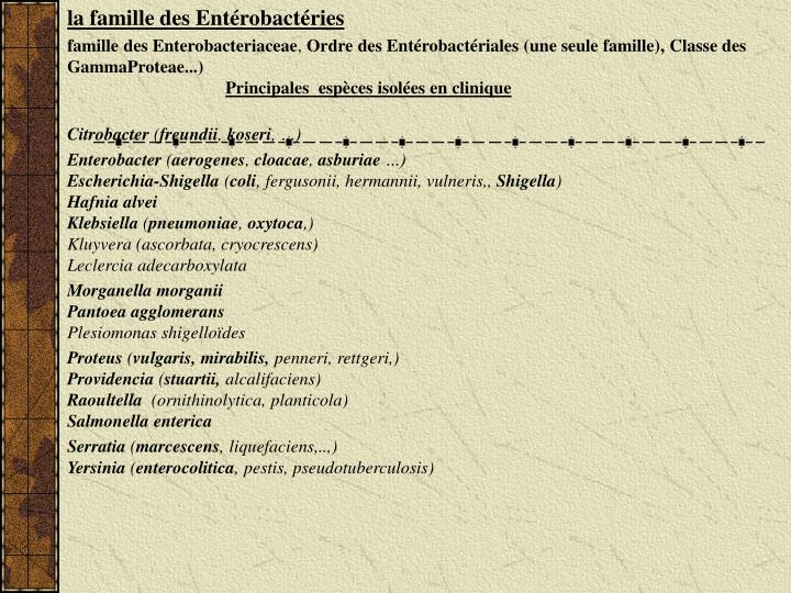la famille des Entérobactéries
