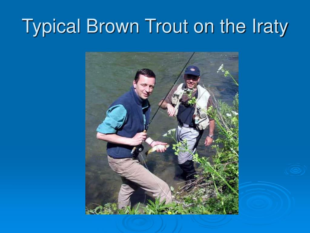 Typical Brown Trout on the Iraty