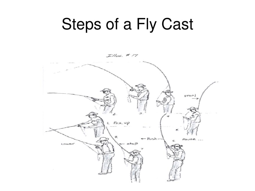 Steps of a Fly Cast