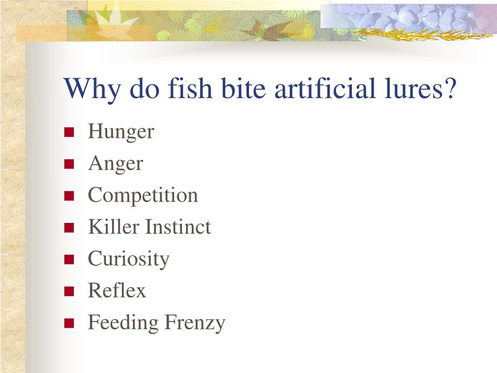 Why do fish bite artificial lures?