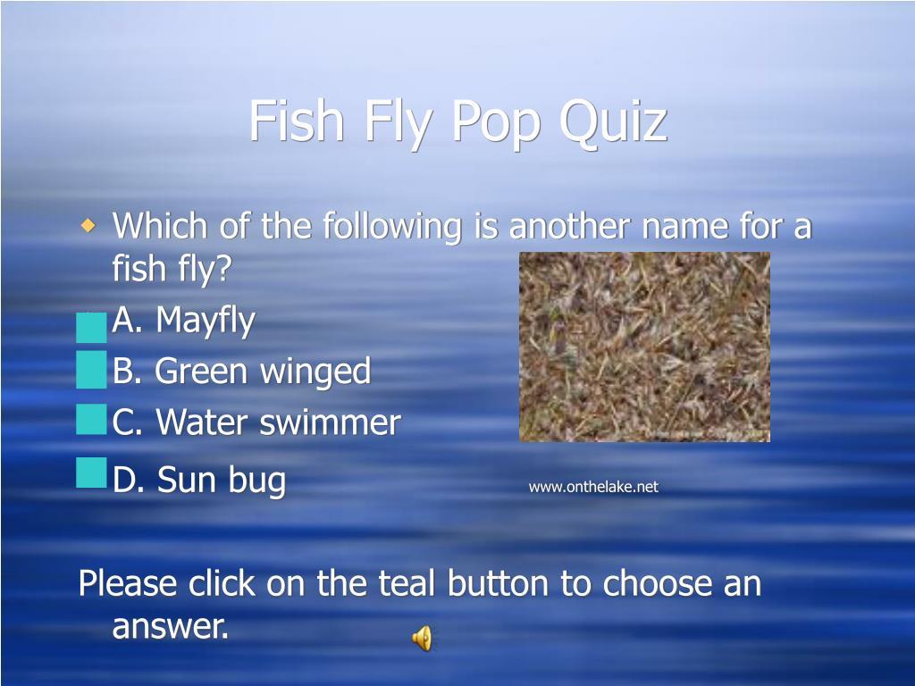 Fish Fly Pop Quiz