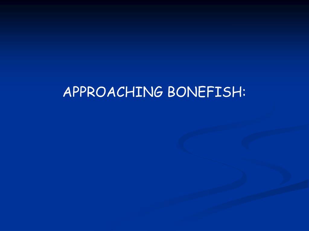 APPROACHING BONEFISH: