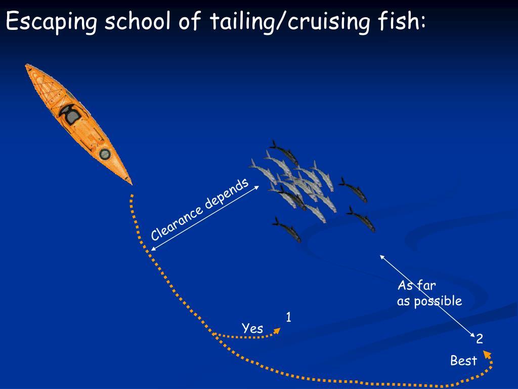 Escaping school of tailing/cruising fish: