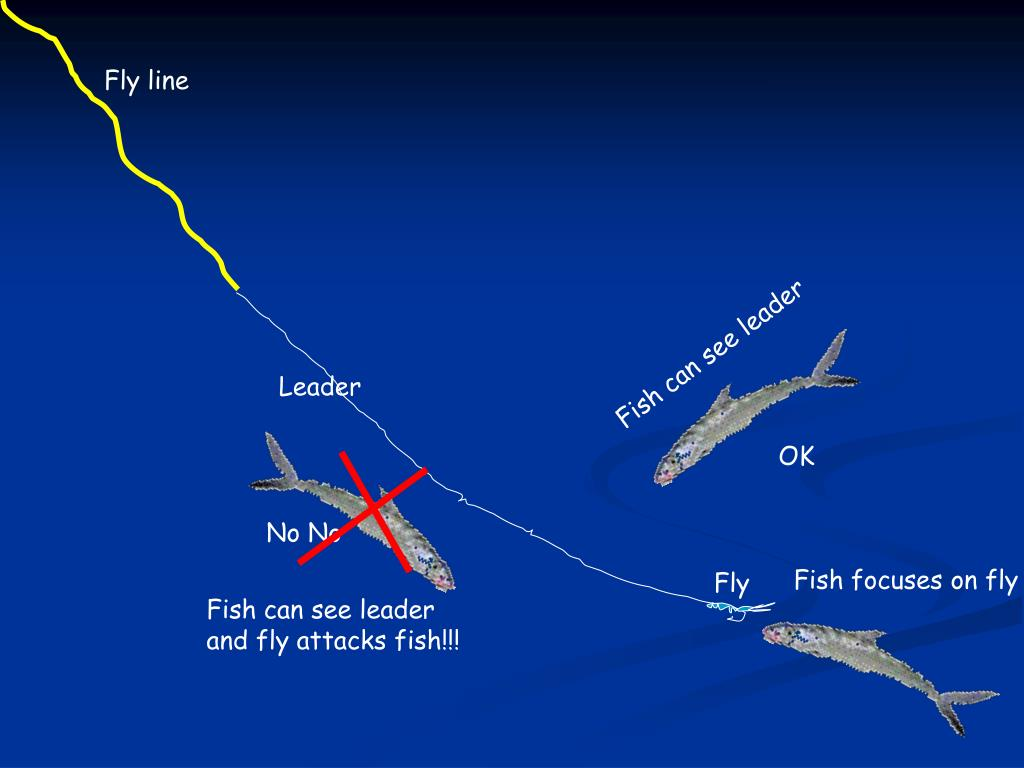 Fly line