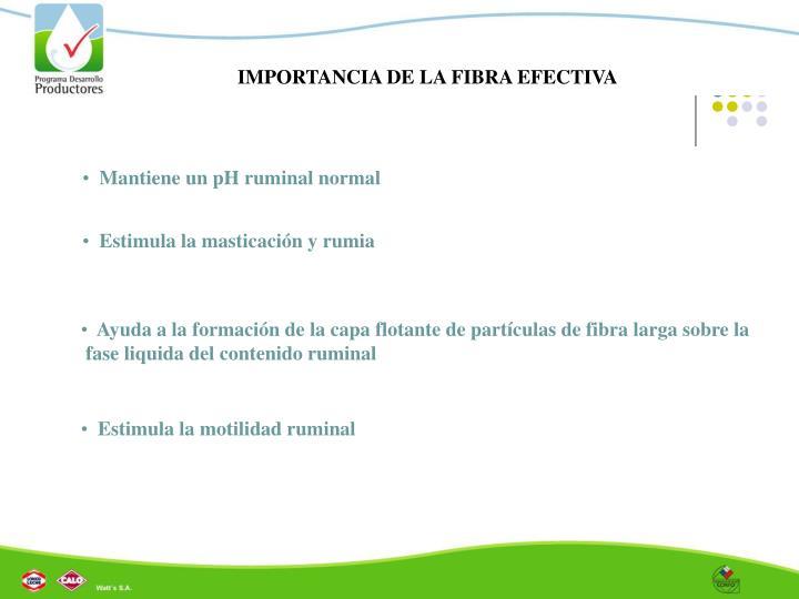 IMPORTANCIA DE LA FIBRA EFECTIVA