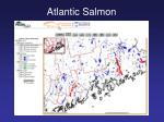 atlantic salmon20