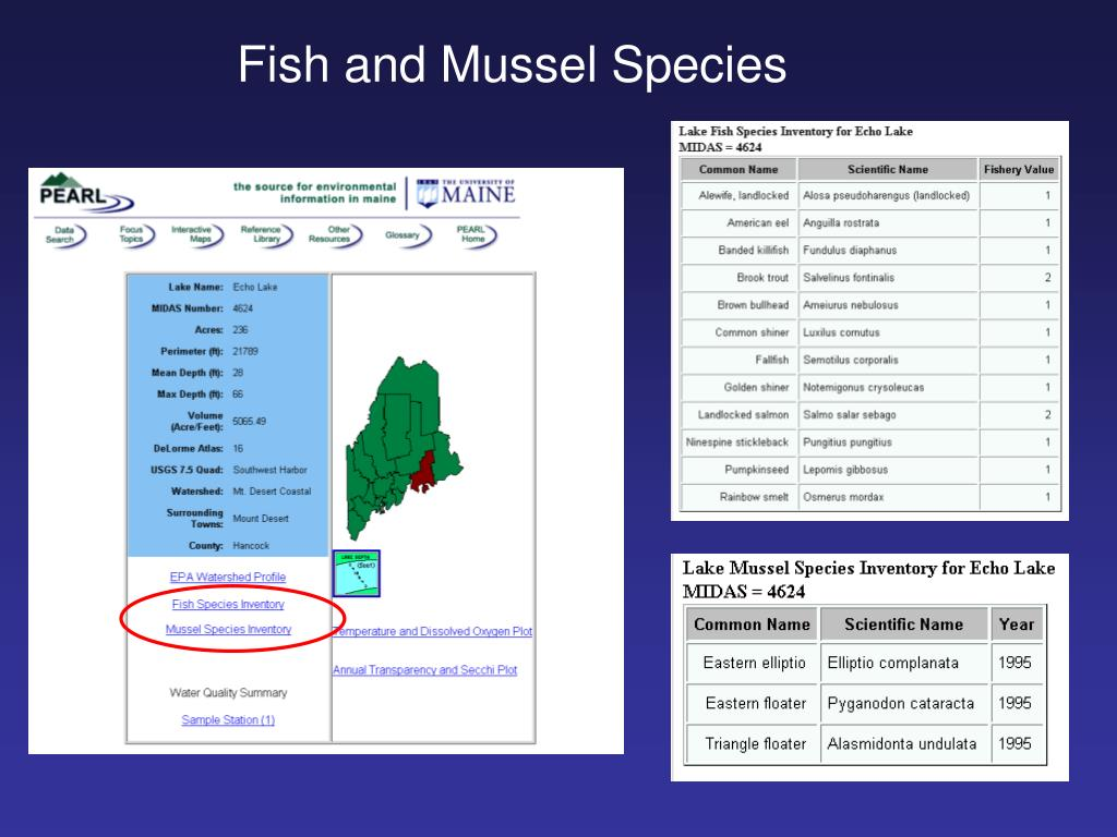 Fish and Mussel Species