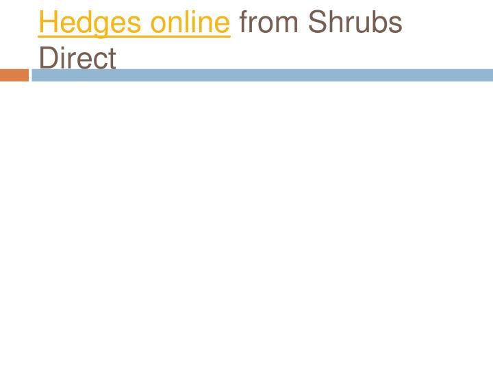 hedges online from shrubs direct
