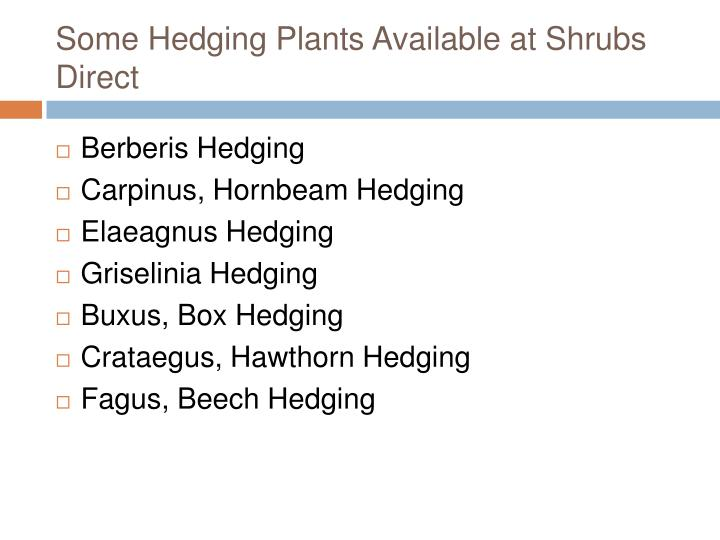 Some Hedging Plants Available at Shrubs Direct