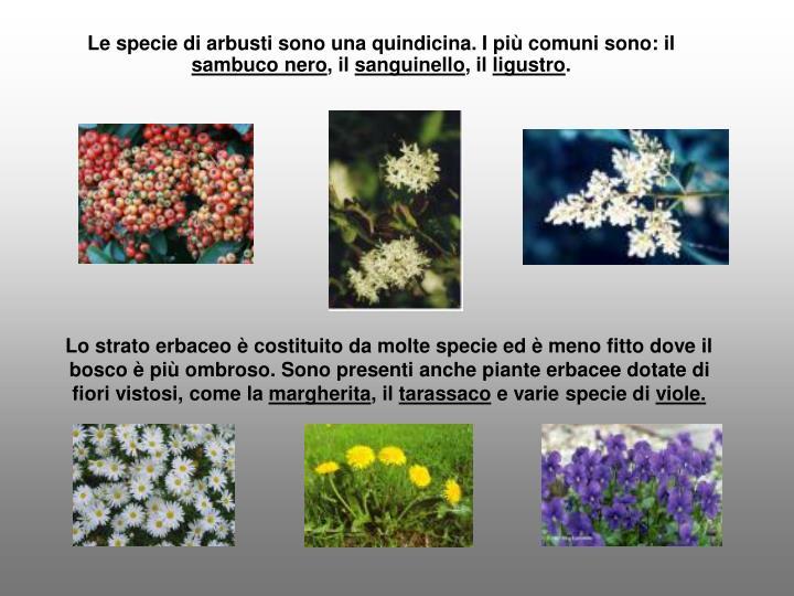 Le specie di arbusti sono una quindicina. I più comuni sono: il