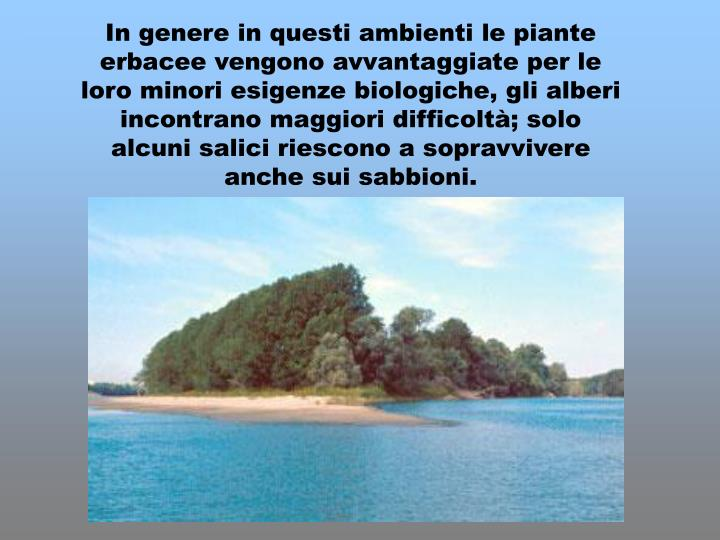 In genere in questi ambienti le piante erbacee vengono avvantaggiate per le loro minori esigenze biologiche, gli alberi incontrano maggiori difficoltà; solo alcuni salici riescono a sopravvivere anche sui sabbioni.