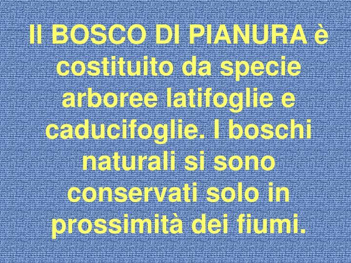 Il BOSCO DI PIANURA è costituito da specie arboree latifoglie e caducifoglie. I boschi naturali si sono conservati solo in prossimità dei fiumi.