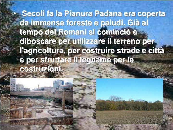 Secoli fa la Pianura Padana era coperta da immense foreste e paludi. Già al tempo dei Romani si cominciò a diboscare per utilizzare il terreno per l'agricoltura, per costruire strade e città e per sfruttare il legname per le costruzioni.