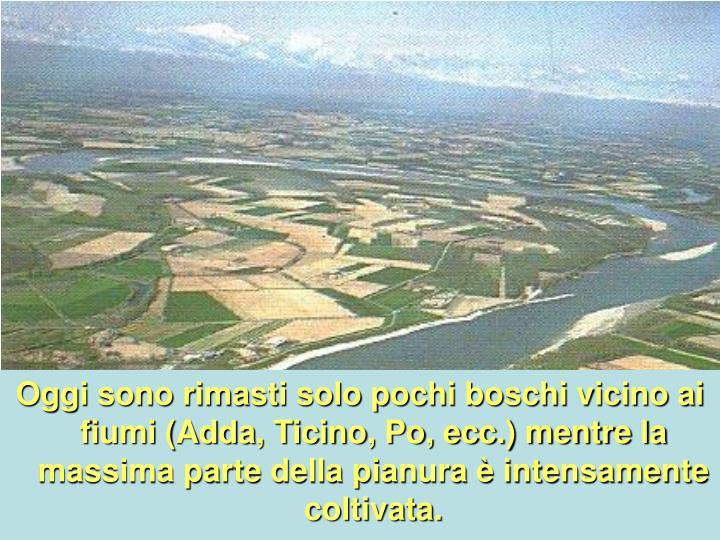 Oggi sono rimasti solo pochi boschi vicino ai fiumi (Adda, Ticino, Po, ecc.) mentre la massima parte della pianura è intensamente coltivata.