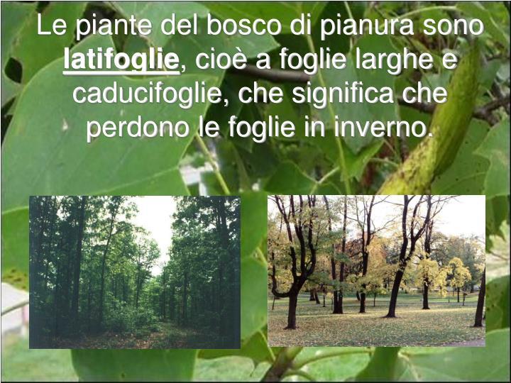 Le piante del bosco di pianura sono