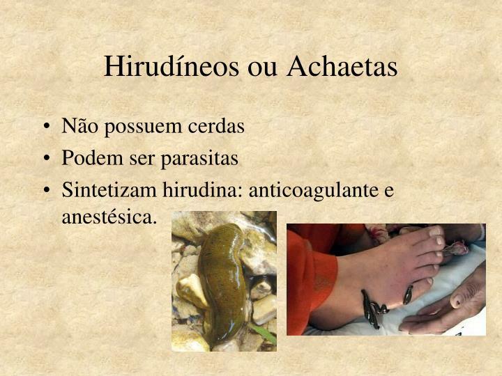 Hirudíneos ou Achaetas