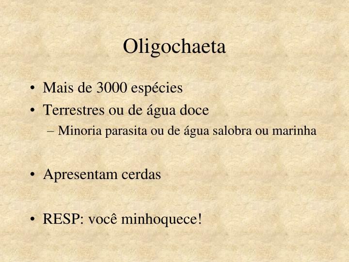 Oligochaeta
